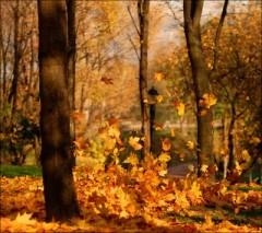 Poesia Novembre, Giovanni Pascoli, novembre Giovanni Pascoli, poesie brevi, parafrasi novembre, scuola poesie, appunti,Myricae